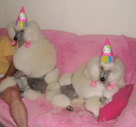 animals wearing birthday hats - photo #17