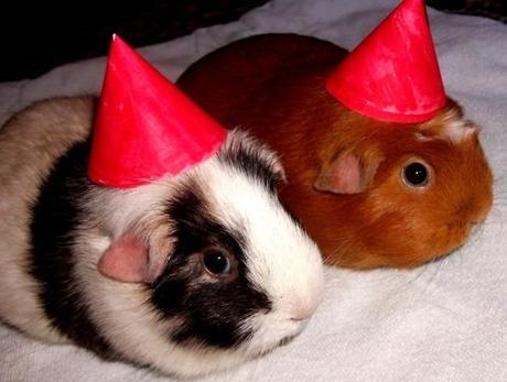 animals wearing birthday hats - photo #8