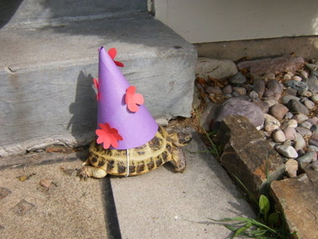 animals wearing birthday hats - photo #31